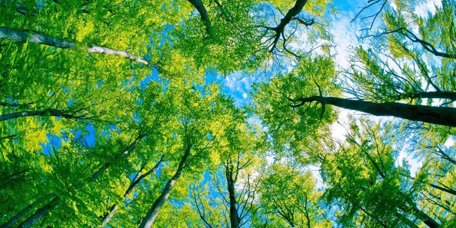 Ecosia le moteur de recherche qui plante hellodemain for Recherche plante