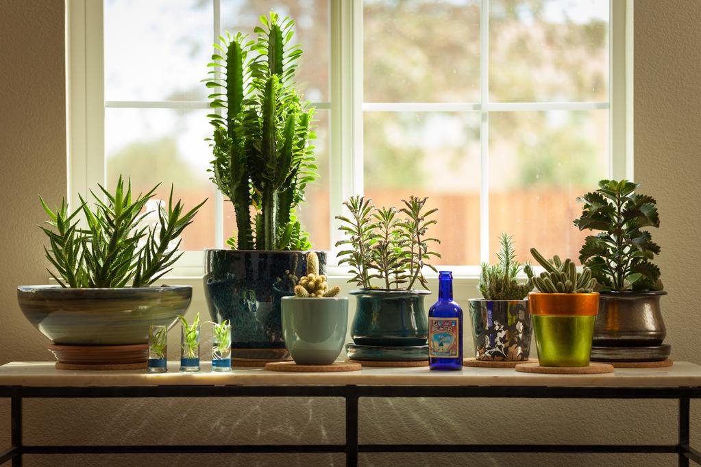 Les plantes anti pollution d 39 int rieur selon la nasa - Plante interieur anti humidite ...