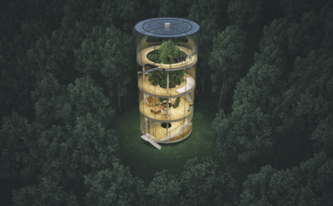 Tree in the House : quand la maison prend racine en forêt